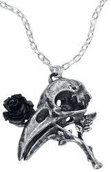 Quietus Rose