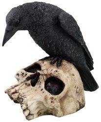 Ravens Remains - Raven on Skull